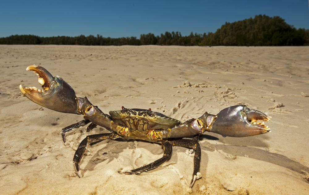IMG-021.Cape Leveque.Hunters Creek.mud crab